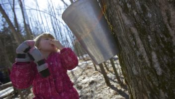 Hop on the Muskoka Maple Trail
