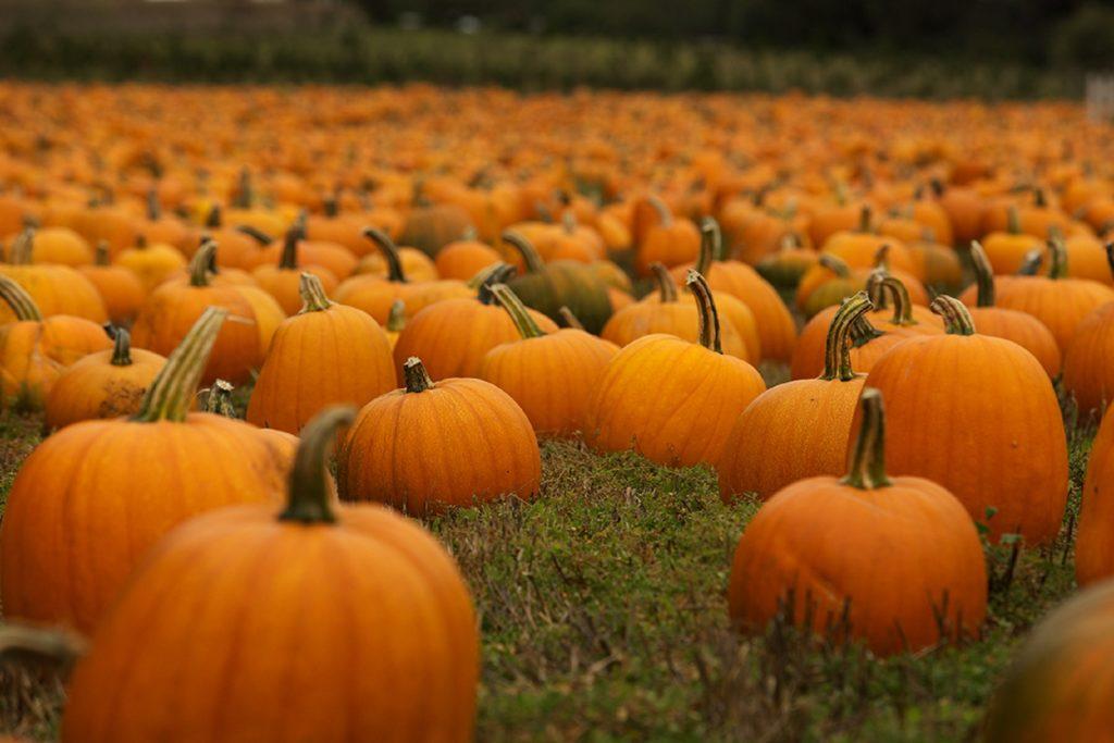 Haunted Halloween Weekend in Algonquin Park