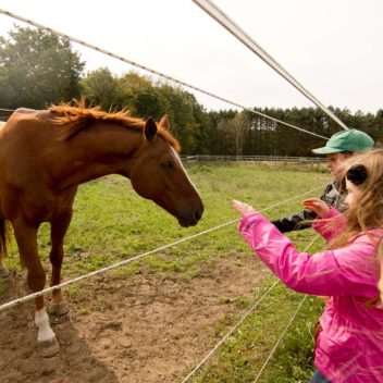 Kids with Horses