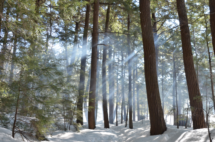 Limberlost Forest in the Winter