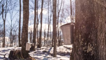 The Ultimate Guide to the Muskoka Maple Trail
