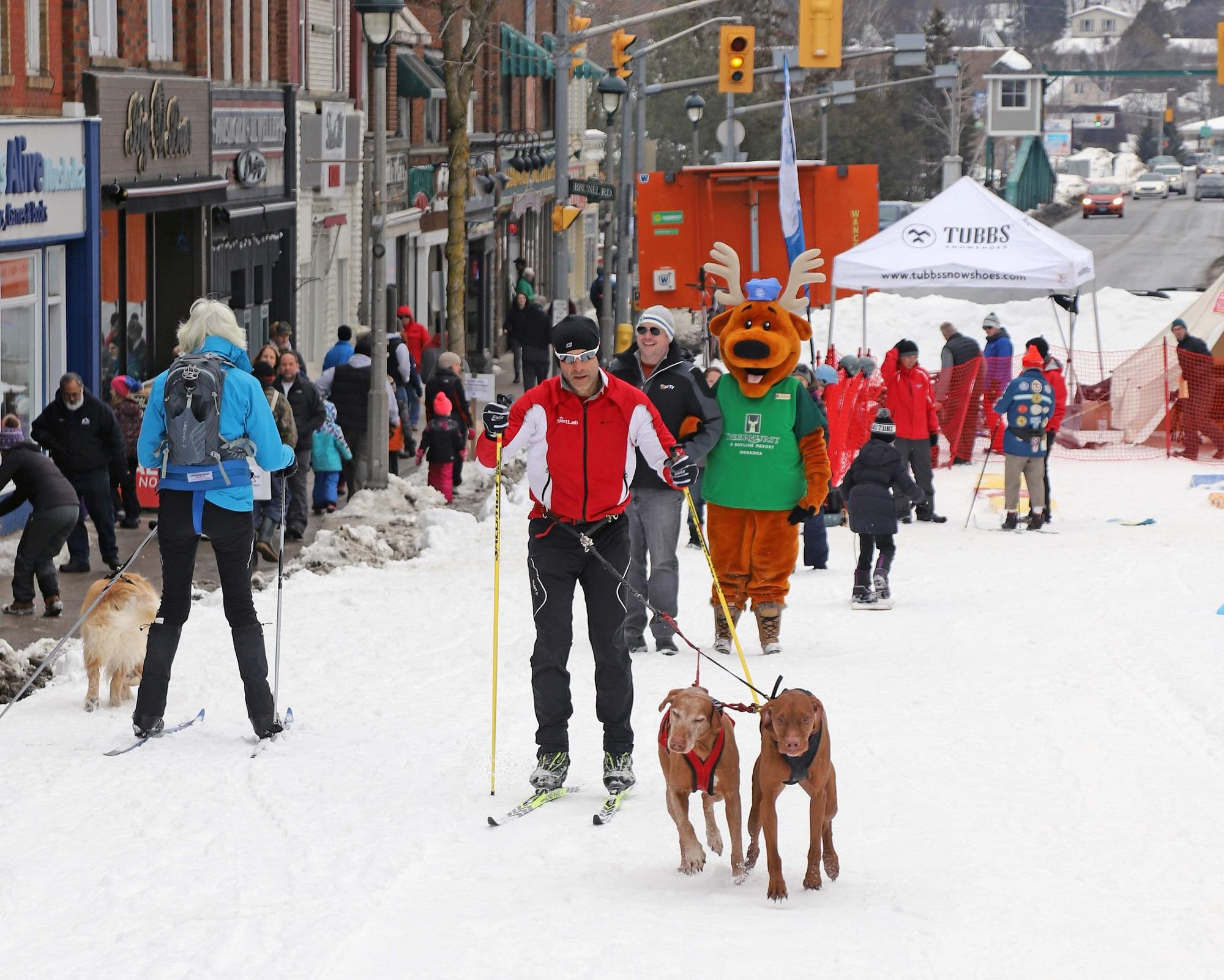 Skiijoring on Main Street